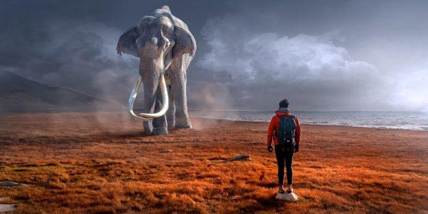 Mand med elefant i baggrunden